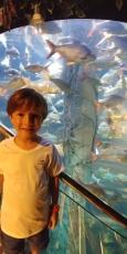 visite du très bel aquarium de KL