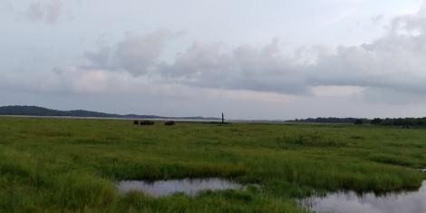 Nous apercevons un troupeau au loin,le parc ferme mais nos chauffeurs veulent nous enmener les voir.
