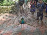Visite du Bird Park pour Simon.