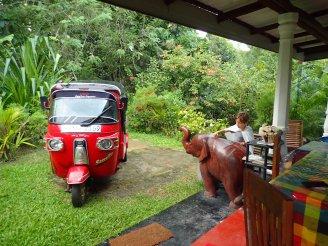 L'éléphant de Simon et notre TUK TUK.