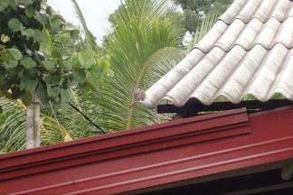 Nos visiteurs du petit déjeuner : écureuil ......