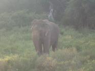 Et là enfin: un éléphant.