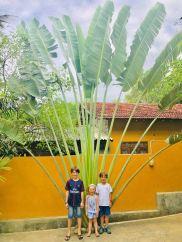 Dernière photo devant un superbe palmier éventail.