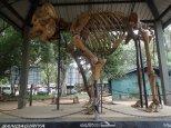 Visite à Elephant Transit Home.