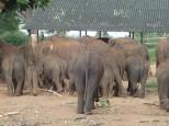 Les popotins des éléphants!!! comme dit Simon.