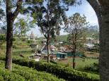 Mais aussi les mauvais côtés : baraquements pour parquer les cueilleurs tamouls.