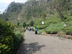 Et rencontre sur notre chemin de ces femmes tamoules.