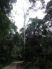 L'arbre du vautour à l'entrée de la forêt des sorcières!!! Tout un conte!!LOL