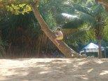 Après ce voyage petite plage. La jungle beach, elle porte bien son nom!!!!