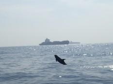 Et puis en rentrant des dauphins joueurs.