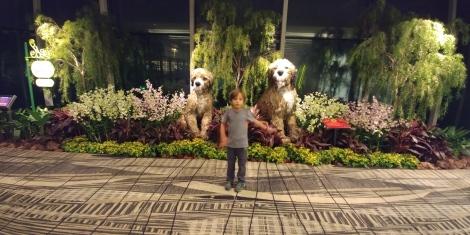 Aéroport de Singapour. Année du chien oblige.