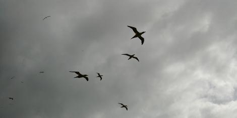 Oiseaux merveilleux.
