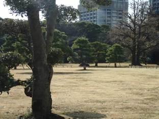 Dans le jardin de Hama-rikyu.