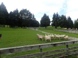 Départ de notre paradis pour la ferme de Sheepworld.