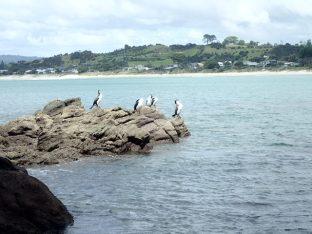 On repart et sur notre route nous croisons de superbes cormorans se faisant sécher au soleil.