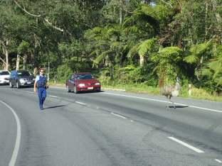 Lendemain matin on reprend la route pour WAIHI et là sur la route.