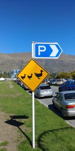 Et là aussi c'est véridique les canards traversent!!!