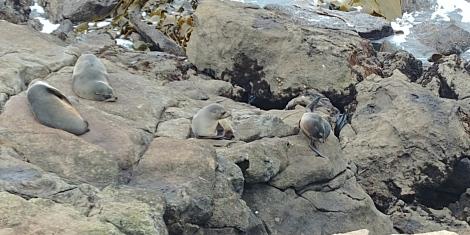 Les bébés restent sur les rochers.