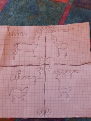 Avant de continuer notre route, Simon nous a fait ce beau dessin afin de reconnaître les différentes sortes de lama.