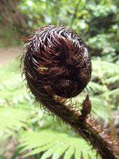 La fougère argentée symbole de la NZ.
