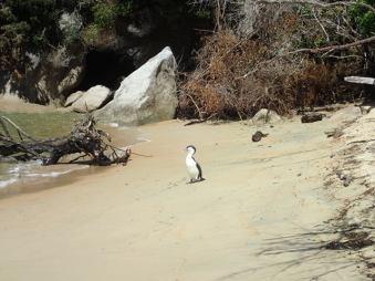 Un magnifique cormoran nous attend ...