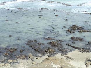 Curio Bay . Une des rares forêts fossilisées au monde que l'on peut approcher.