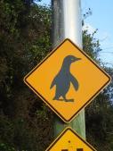 Attention aux pingouins que l'on a toujours pas vu.