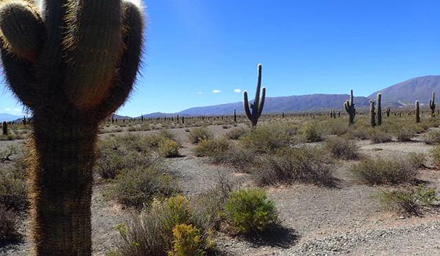 Désert de cactus…