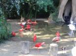 Magnifique parc en pleine forêt tropicale qui contient 140 espèces d'oiseaux.