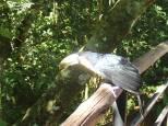 Eh oui un magnifique toucan.