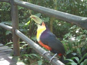 Magnifique oiseau.