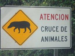 Lendemain matin départ pour les chutes côté Argentine et pareil en plus des léopards, les tapirs et .........