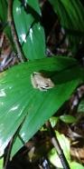 Petite balade de nuit et concert de grenouilles.