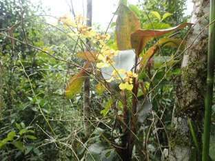 De nombreuses sortes d'orchidées poussent dans la forêt.