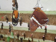 Endroit magique sur les papillons.