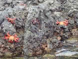 Des crabes rouges nous attendent à l'accostage.