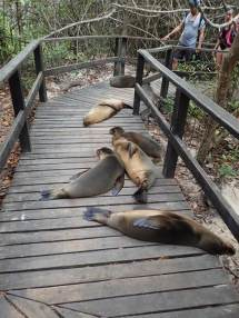 Petit tour vers la Concha de Perla, petite baie accessible par une passerelle à travers la mangrove.