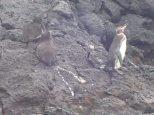 Et que voit-on un peu plus loin? Nos chers petits pingouins.