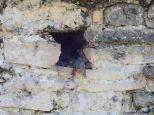 Les iguanes se faufilent partout ds les crevasses.