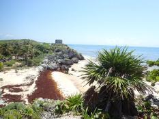 Les sargasses, véritable cata sur tte la côte mexicaine.