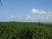 Vue sur la mangrove à la recherche d'une plage.