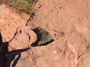 Un écureuil se dore au soleil.
