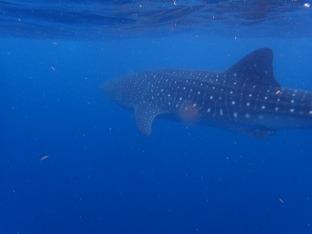 Cet énorme poisson devant nous à bout de bras!